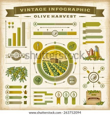 Vintage olive harvest infographic set - stock photo