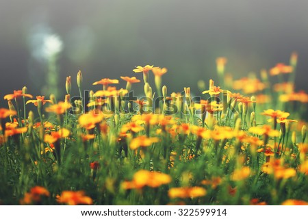 vintage outdoor autumn photo of beautiful yellow flowers in flowerbed in park in soft morning sunlight. Nature background - stock photo