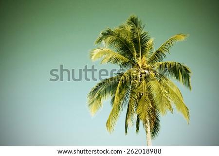 Vintage palm tree - stock photo