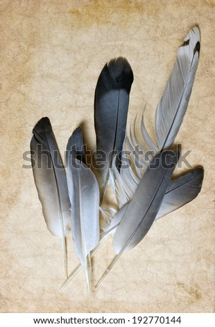 vintage paper and beautiful feathers - stock photo