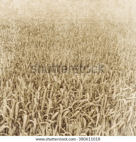 Vintage paper textures. Field of wheat. - stock photo