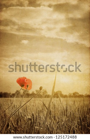 vintage paper textures. Poppies in a wheat field - stock photo