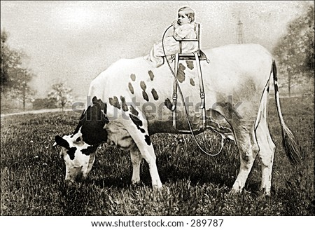 Vintage photo of a Baby on Top of a Cow - stock photo
