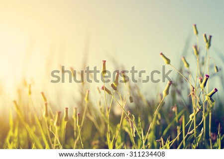 Vintage photo of abstract nature background with wild flowers and plants dandelions - stock photo