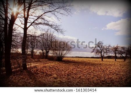 Vintage photo of autumn background - stock photo