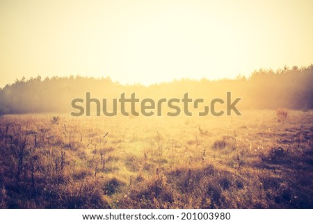 vintage photo of autumn field - stock photo