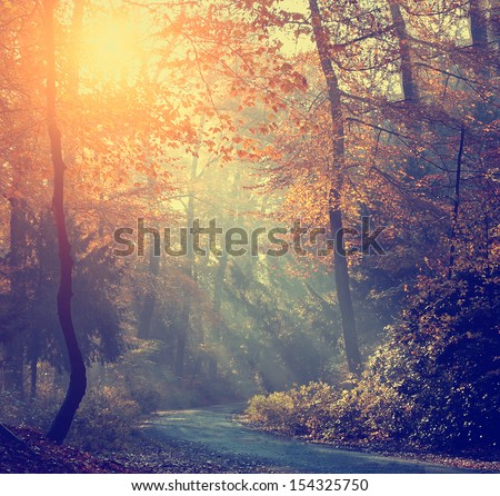 Vintage photo of autumn forest - stock photo
