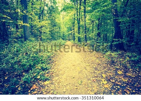 Vintage photo of autumnal forest landscape with many fallen leaves on ground. Beautiful polish forest at autumn.  - stock photo