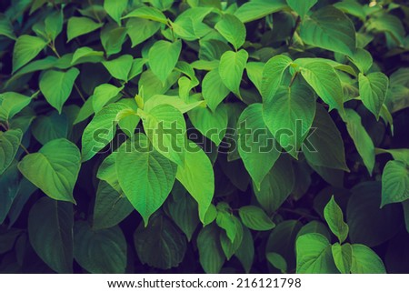 vintage photo of bean leaves - stock photo