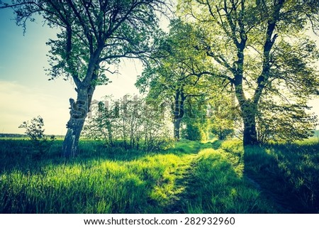 Vintage photo of beautiful alley of trees on old forgotten road in countryside. Springtime landscape photographed in Poland - stock photo