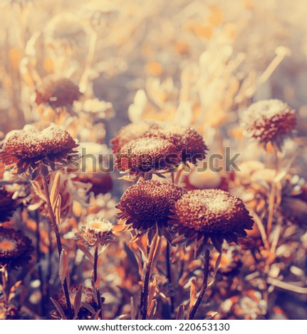 Vintage photo of beautiful flowers/ Autumn flowers toned image - stock photo