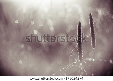 vintage photo of blooming grass - stock photo