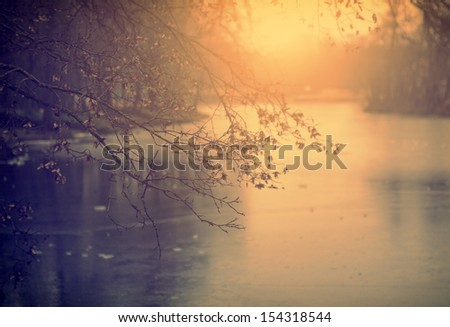 Vintage photo of branch in sunset - stock photo