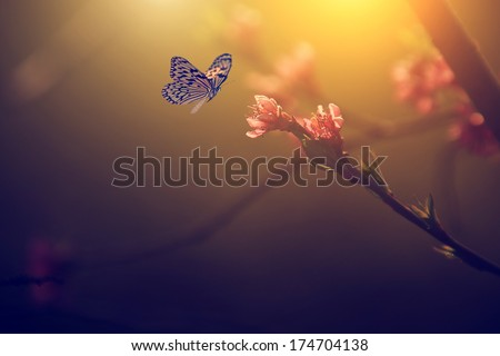 Vintage photo of butterfly and pink tree flower - stock photo