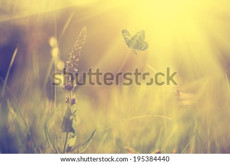 Vintage photo of butterfly and wild flower - stock photo