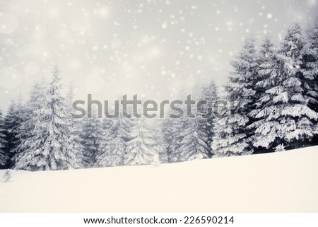 Vintage photo of Christmas background with snowy fir trees  - stock photo