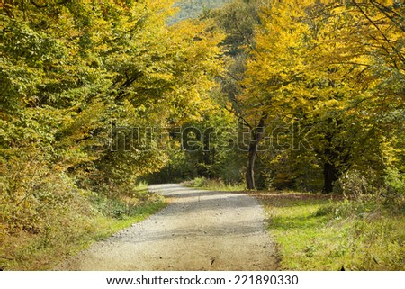 Vintage photo of curving road in autumn forest - stock photo