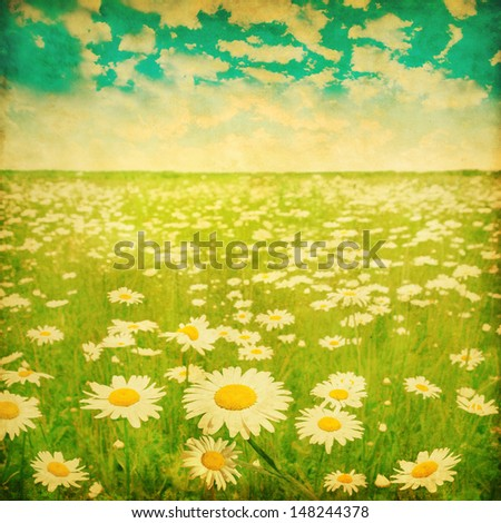 Vintage photo of daisy field and cloudy sky. - stock photo
