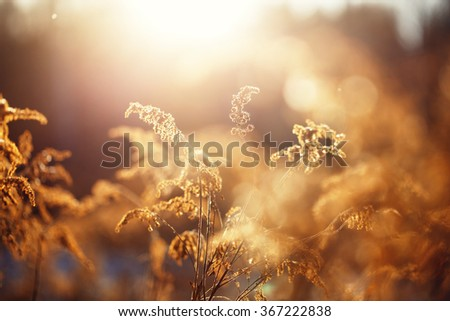 vintage photo of dry wild meadow flowers in winter field on sunny natural background in morning. Outdoor - stock photo