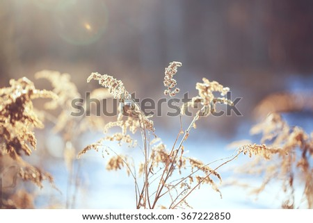 vintage photo of dry wild meadow flowers in winter field on sunny natural background in morning. Outdoor