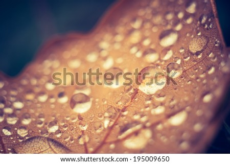 vintage photo of fallen leaf with water droplets - stock photo