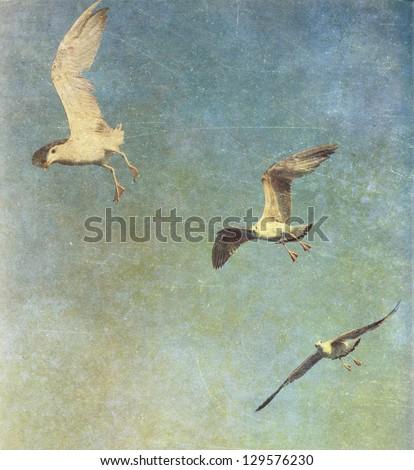 Vintage photo of flying seagulls - stock photo