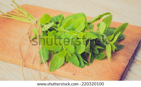 vintage photo of Fresh oregano - stock photo