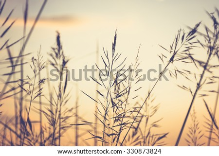 Vintage photo of grasses in the field