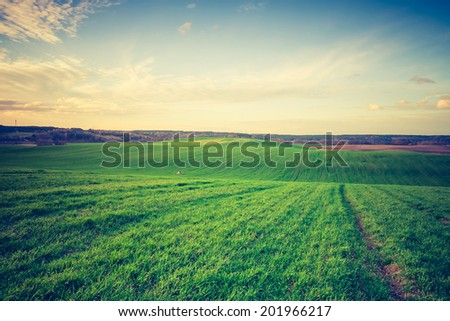 vintage photo of green cereal field