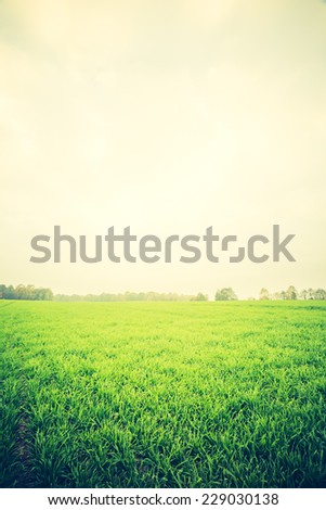 vintage photo of green field landscape