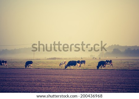 vintage photo of landscape with cows - stock photo
