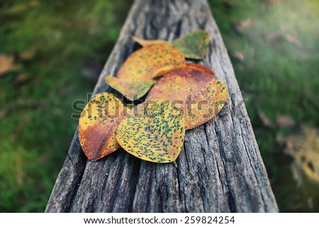 Vintage photo of leaves on old wood background