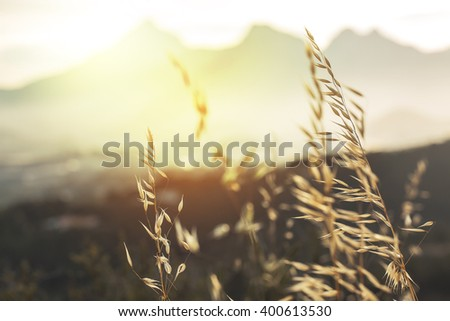vintage photo of meadow wild dry yellow plants on mountain background in morning sunlight on sunrise. Outdoor spring photo - stock photo