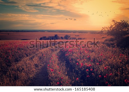 Vintage photo of poppy field in sunset - stock photo