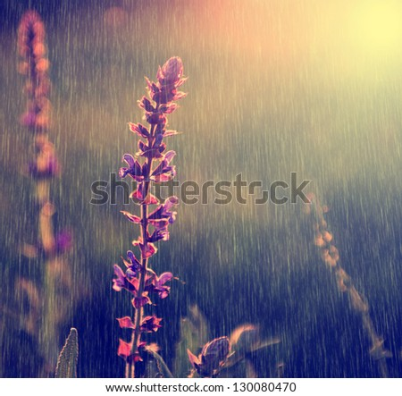 Vintage photo of purple wild flower in rain - stock photo