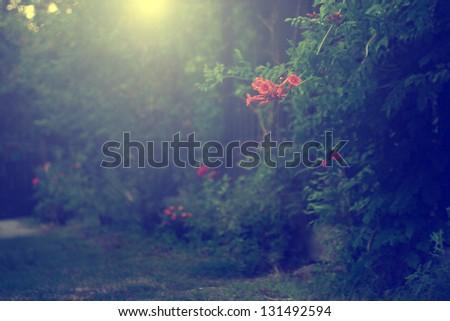 Vintage photo of red garden flower - stock photo