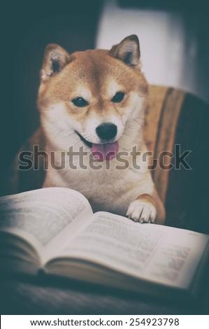 vintage photo of shiba inu dog with book - stock photo