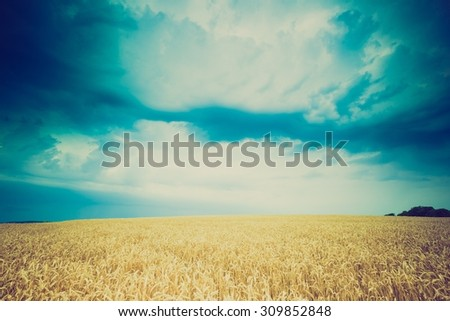 Vintage photo of storm clouds over wheat field. Danger weather with dark sky over fields- photo with vintage mood effect.