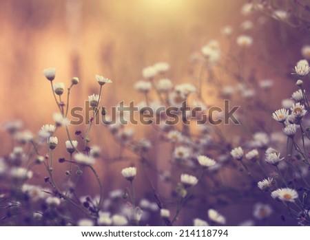Vintage photo of summer / autumn flowers - stock photo