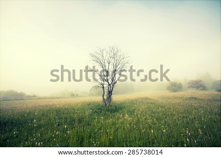 Vintage photo of summer field in morning fog  - stock photo