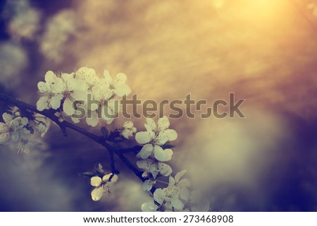 Vintage photo of tree flower blossoms - stock photo