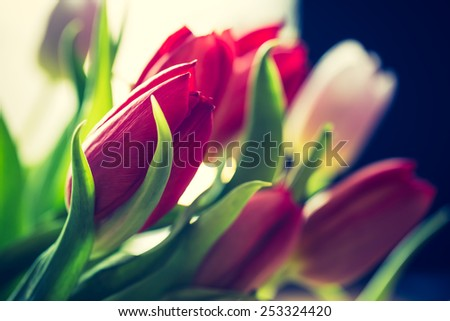 Vintage photo of tulips bouquet - stock photo