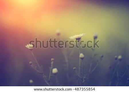 Vintage photo of wild flowers in sunset