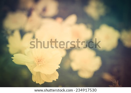 Vintage photo with wild flowers - stock photo
