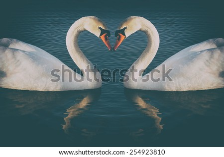 vintage phoyo of romantic two swans, symbol of love