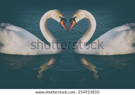 vintage phoyo of romantic two swans, symbol of love - stock photo