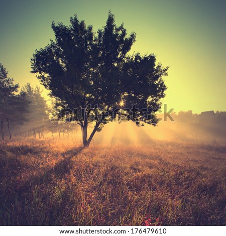 Vintage picture. Beautiful sunny morning - stock photo