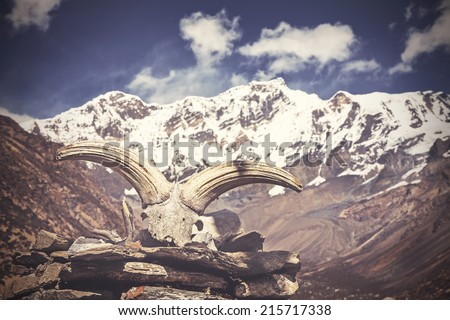 Vintage picture of yak's skull with Himalaya mountains in background, Nepal - stock photo