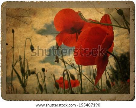 Vintage poppy card - stock photo