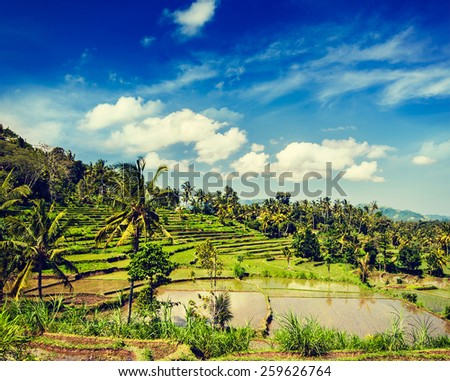 Vintage retro effect filtered hipster style image of green rice terraces on Bali island - stock photo